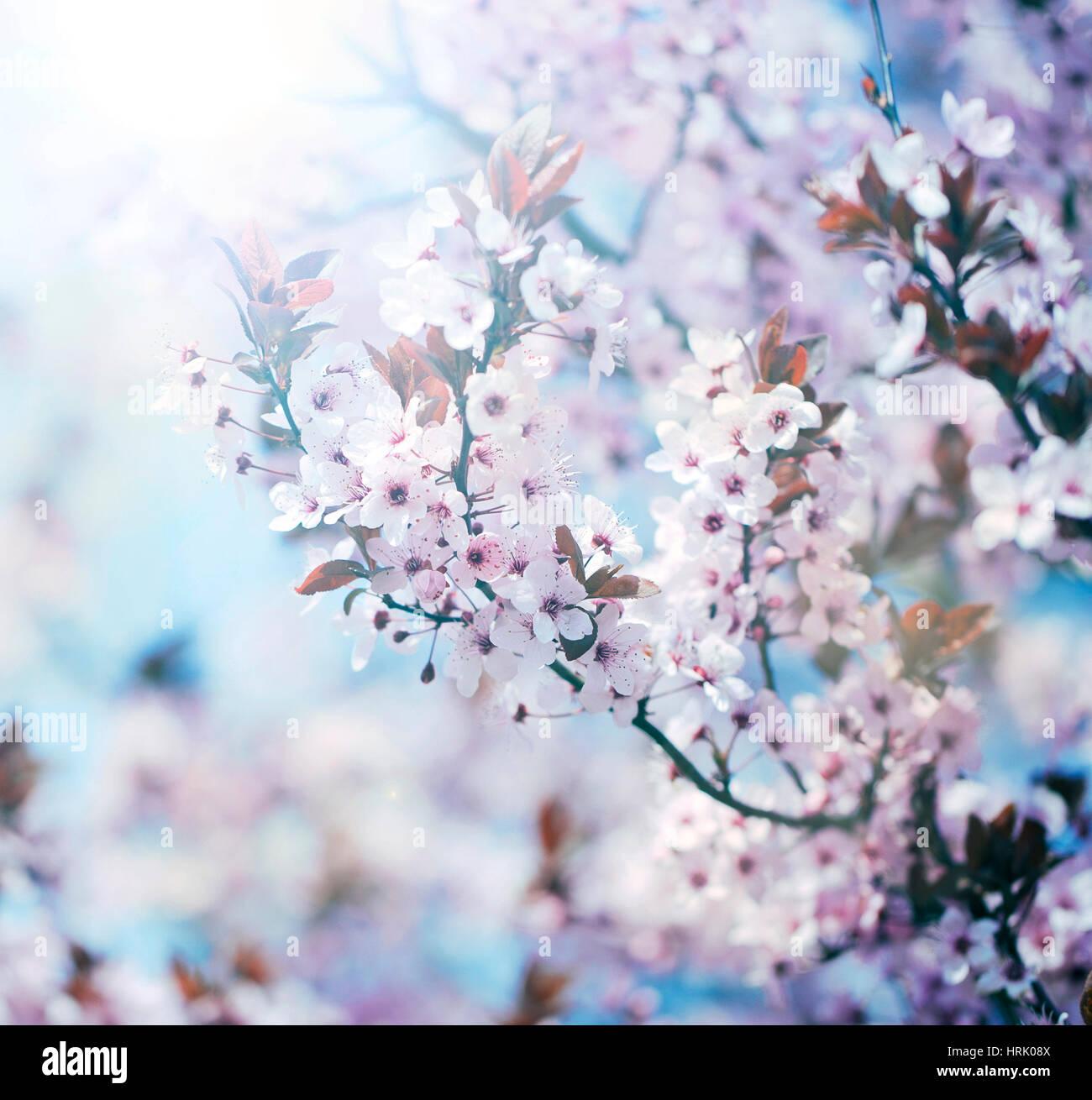 Baum Blüten Stockbild