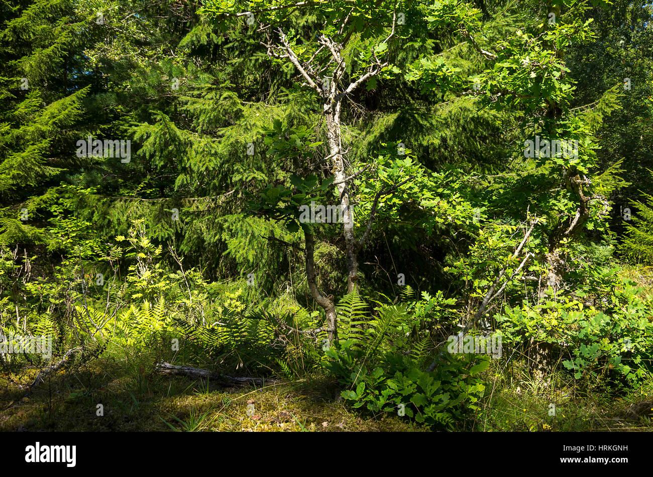 Kleinen Wald Stück mit Unterholz. Stockbild
