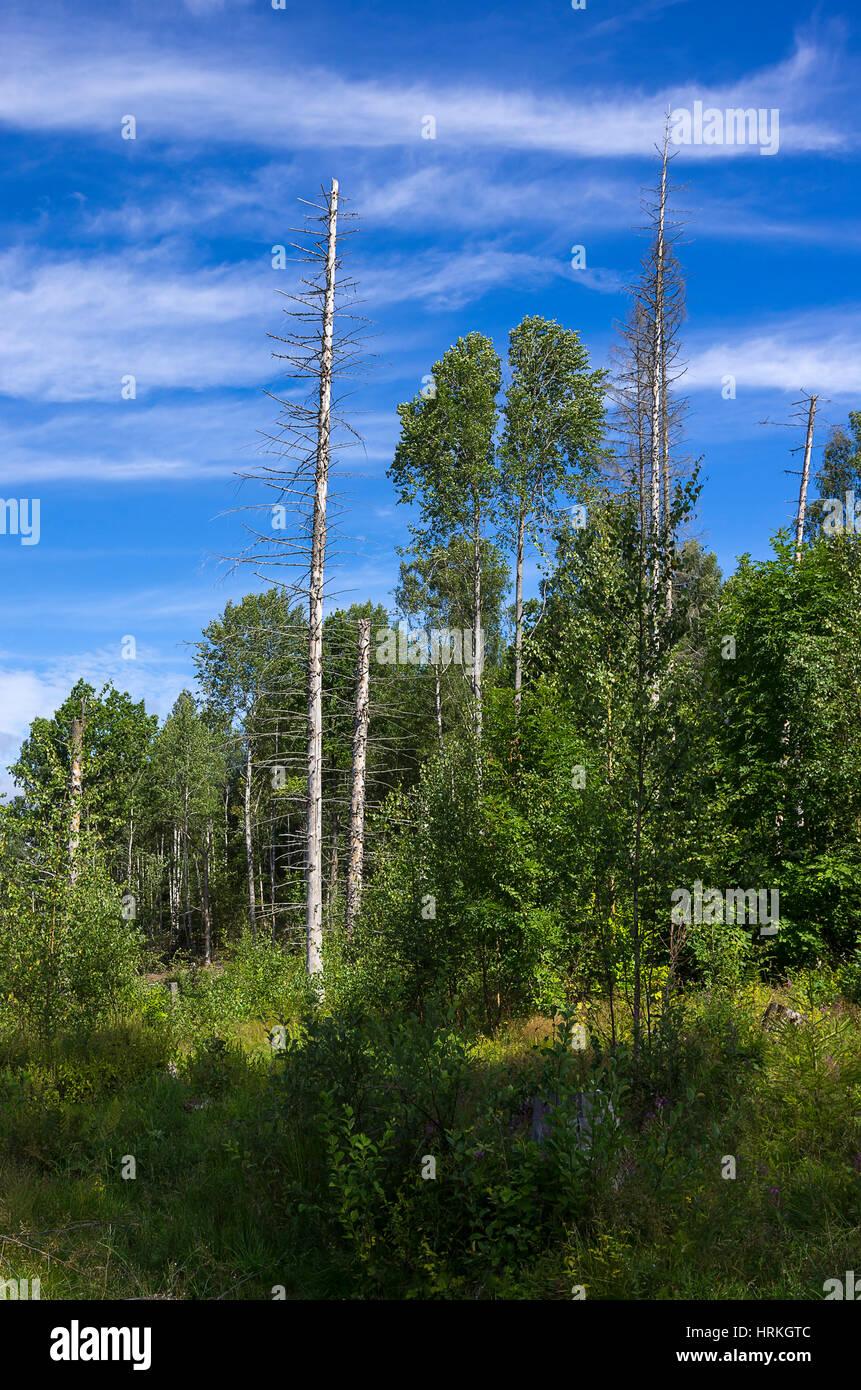 Bewaldeten Platz in Dalsland Grafschaft, Schweden. Stockbild