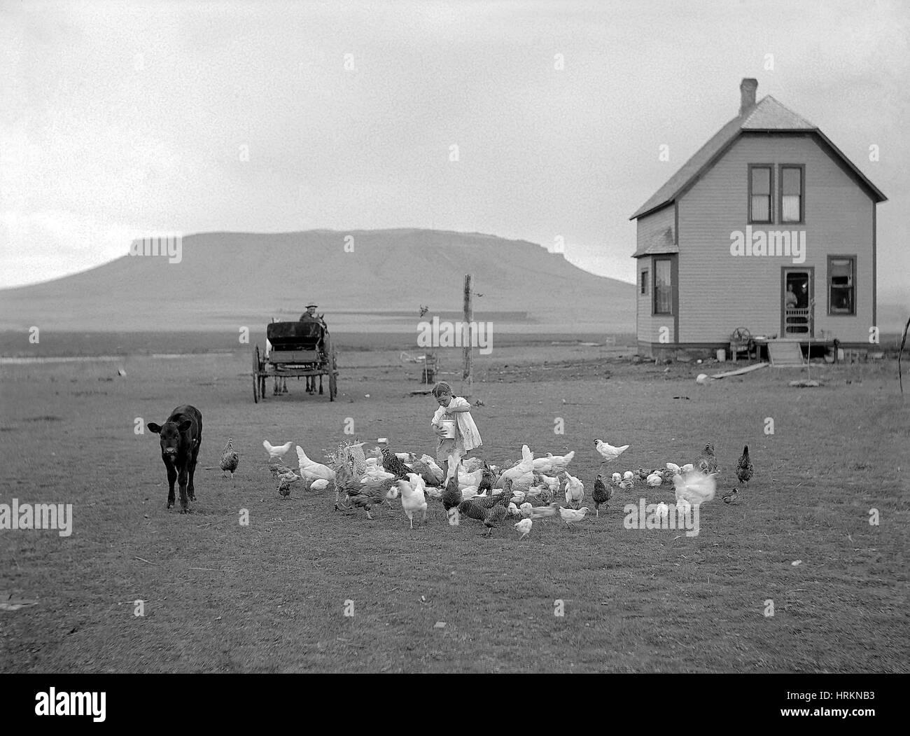 Gehöft, 1910 Stockbild