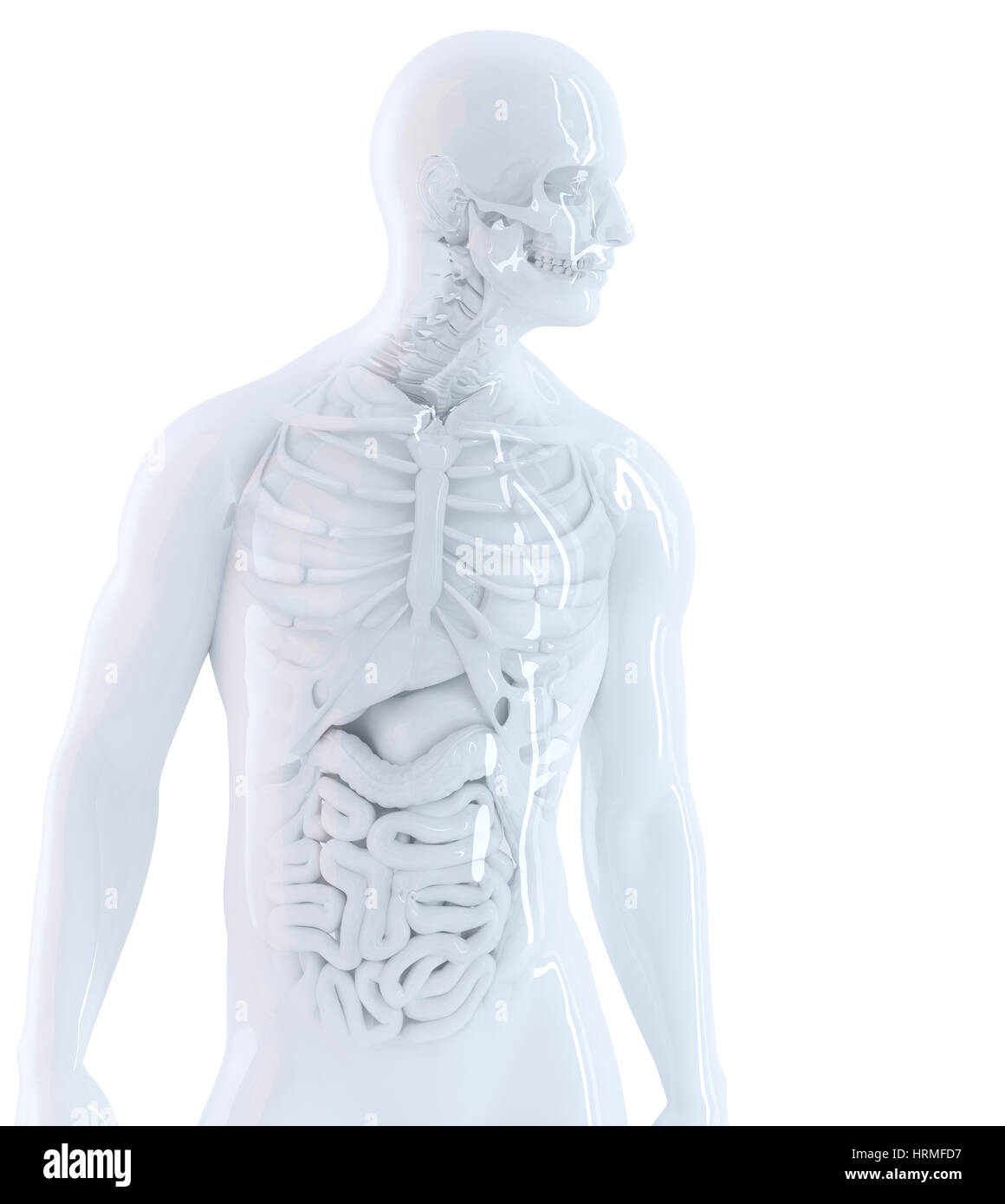 Guts Anatomy Stockfotos & Guts Anatomy Bilder - Alamy