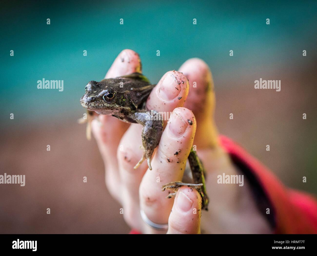 Niedlich Springfrosch Färbung Seite Ideen - Malvorlagen Von Tieren ...