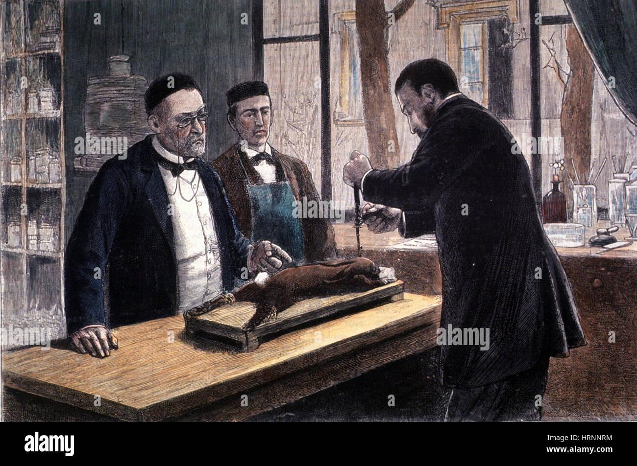 Louis Pasteur, französischer Chemiker und Bakteriologe Stockfoto