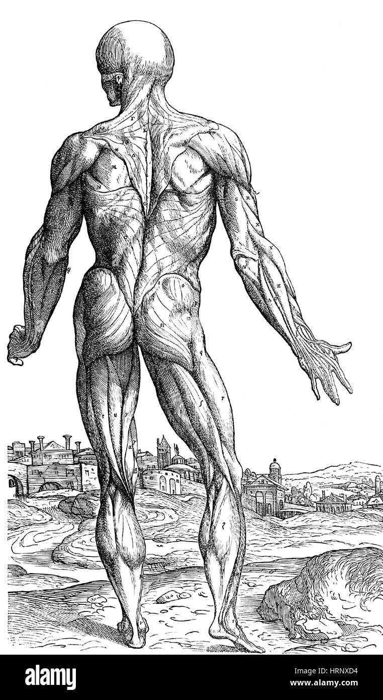 Großzügig Anatomie Beschreibend Und Chirurgische Von Henry Gray ...