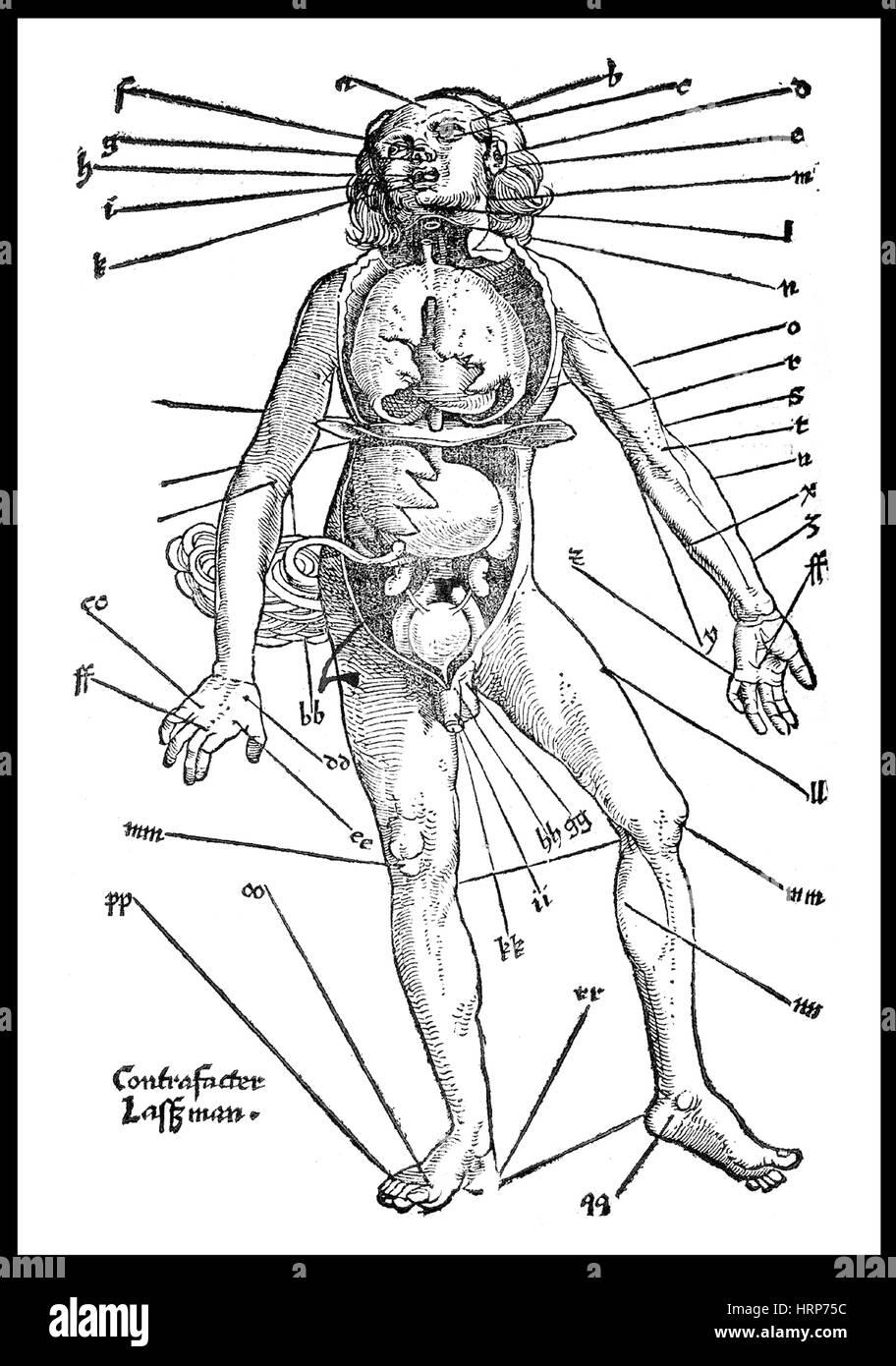 Aderlass, 'Feldbuch der Wundartzney', 1528 Stockbild