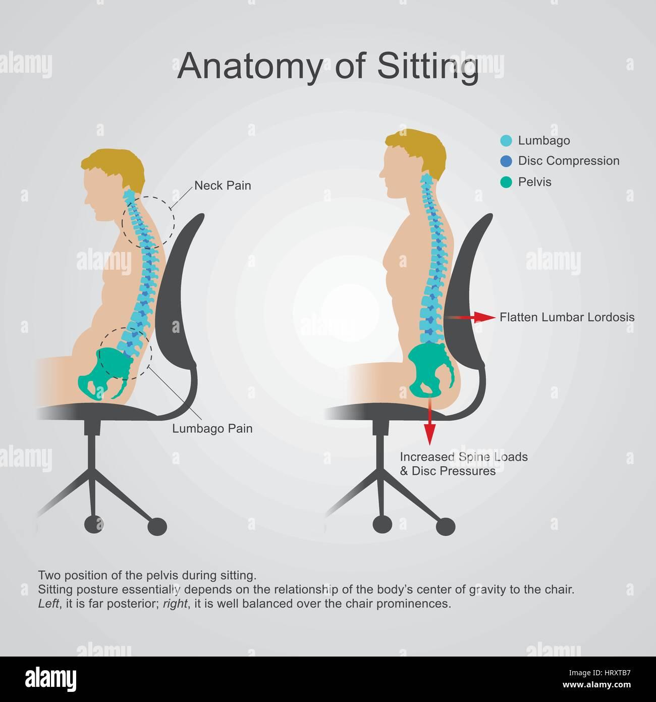 Anatomie des Sitzens der Lendengegend wird manchmal als der unteren ...
