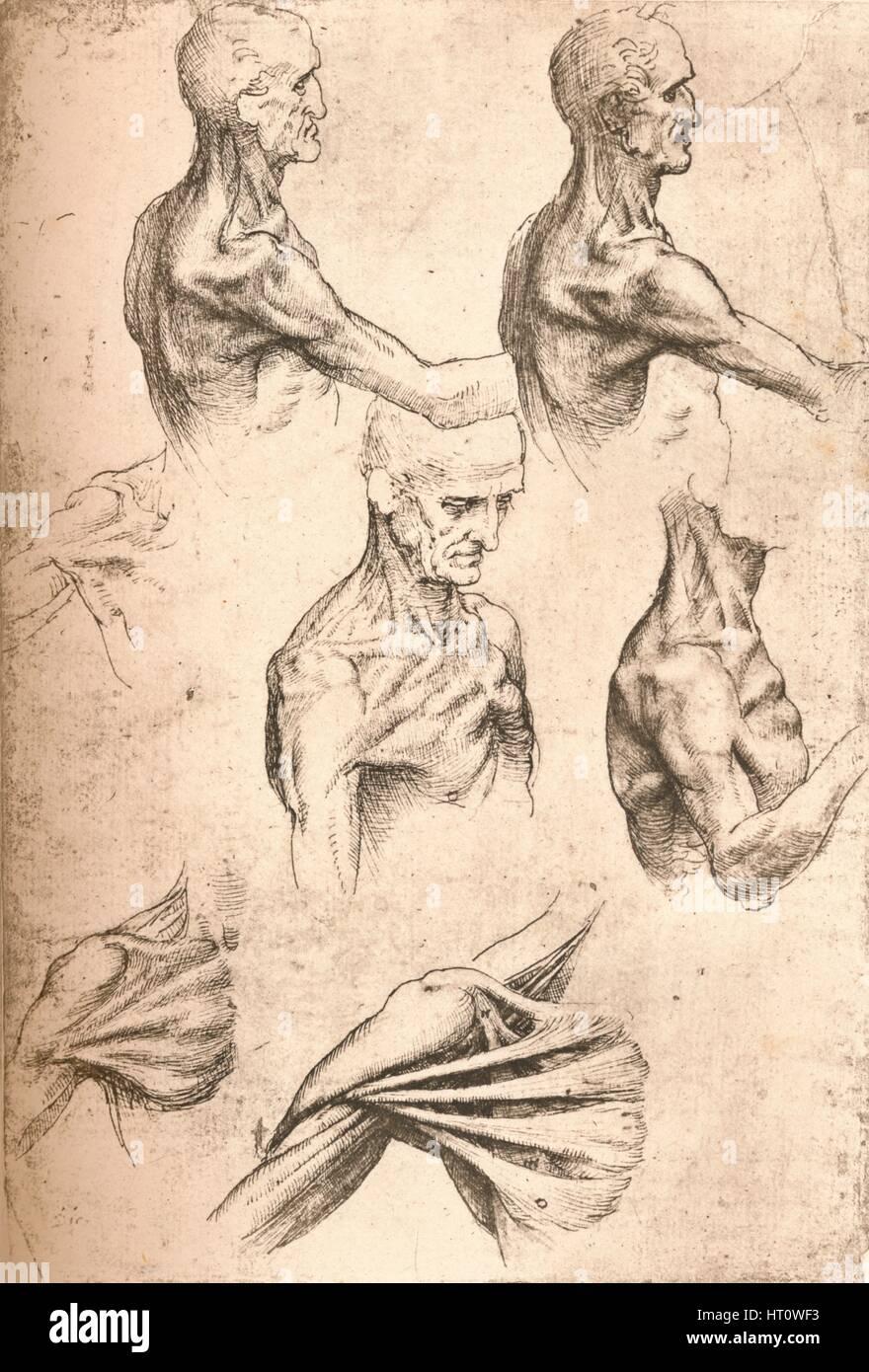 Anatomische Zeichnung, c1472-c1519 (1883). Künstler: Leonardo da ...