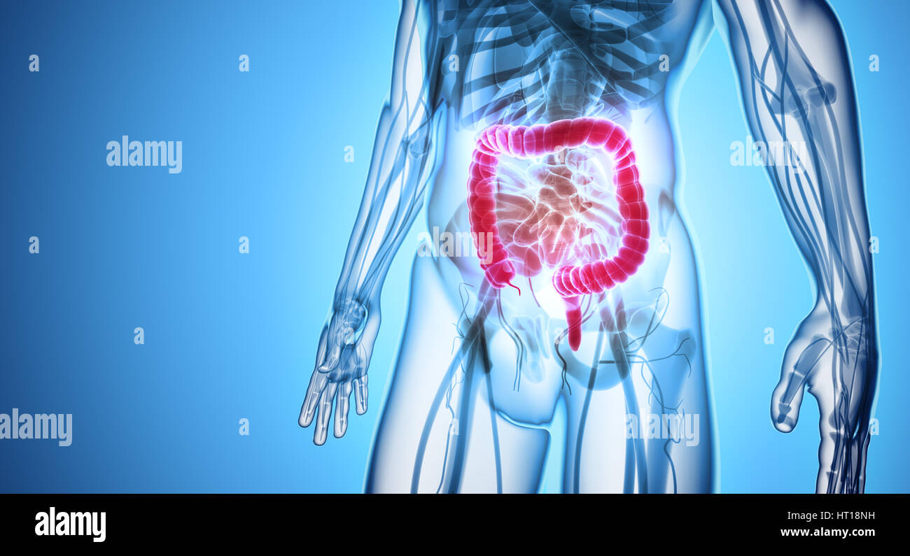 Atemberaubend Menschliches Verdauungssystem Bild Mit Etikett Ideen ...