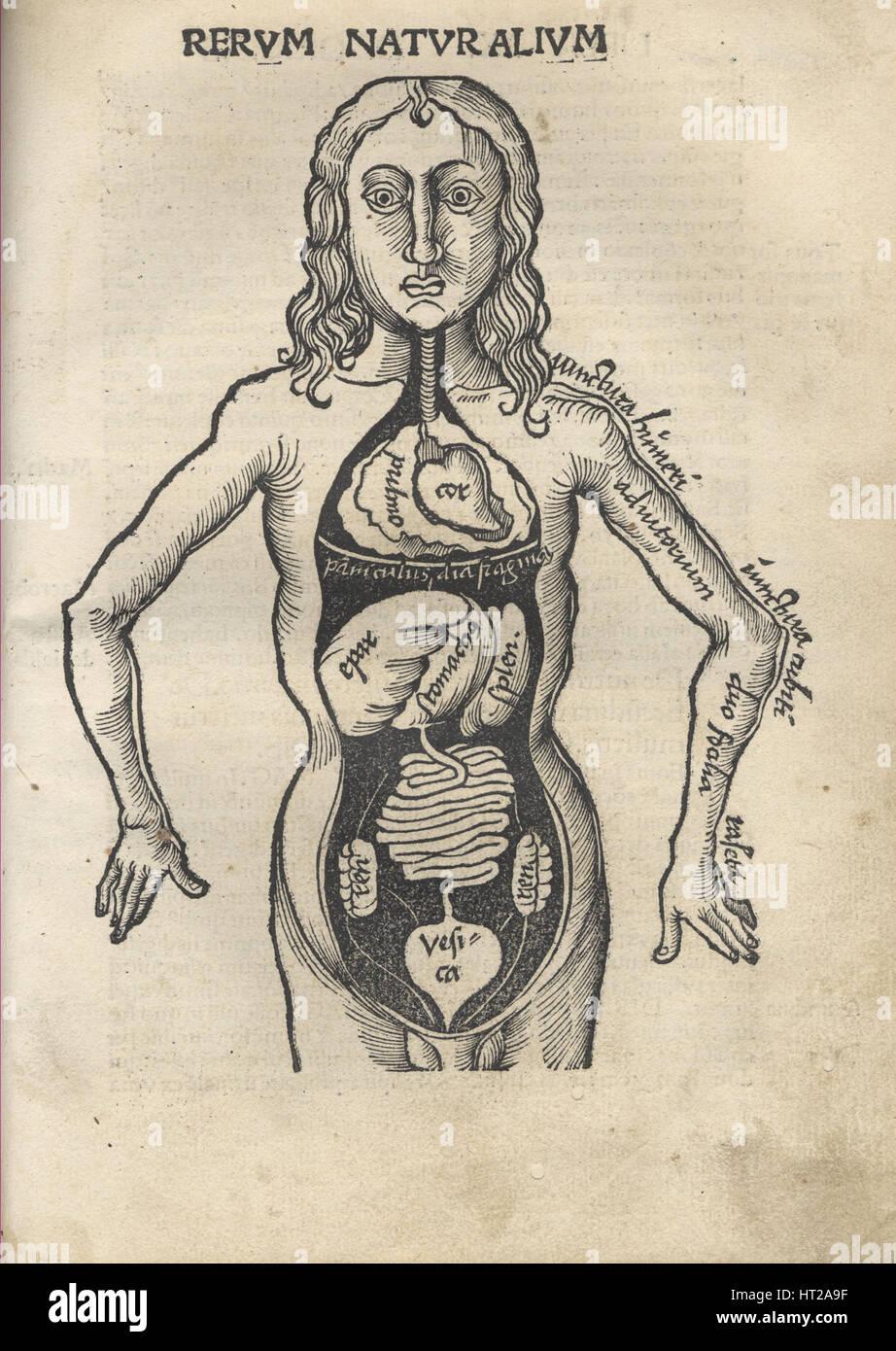 Margarita gedemütigt. Anatomie, 1504. Künstler: Reisch, Gregor (1467-1525) Stockbild