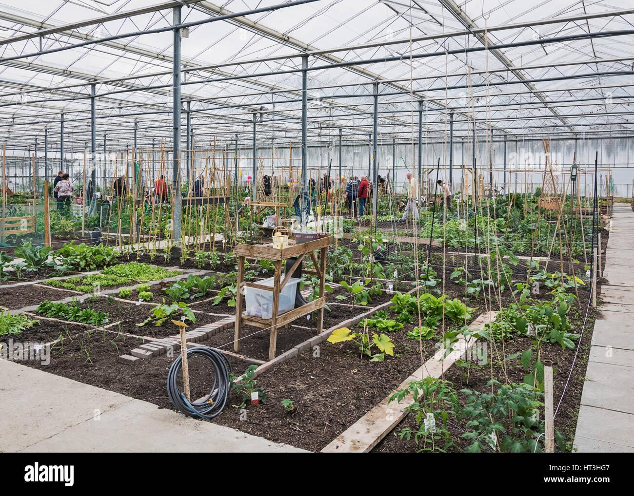 Kleingarten In Einem Gewachshaus In Den Niederlanden Stockfoto Bild