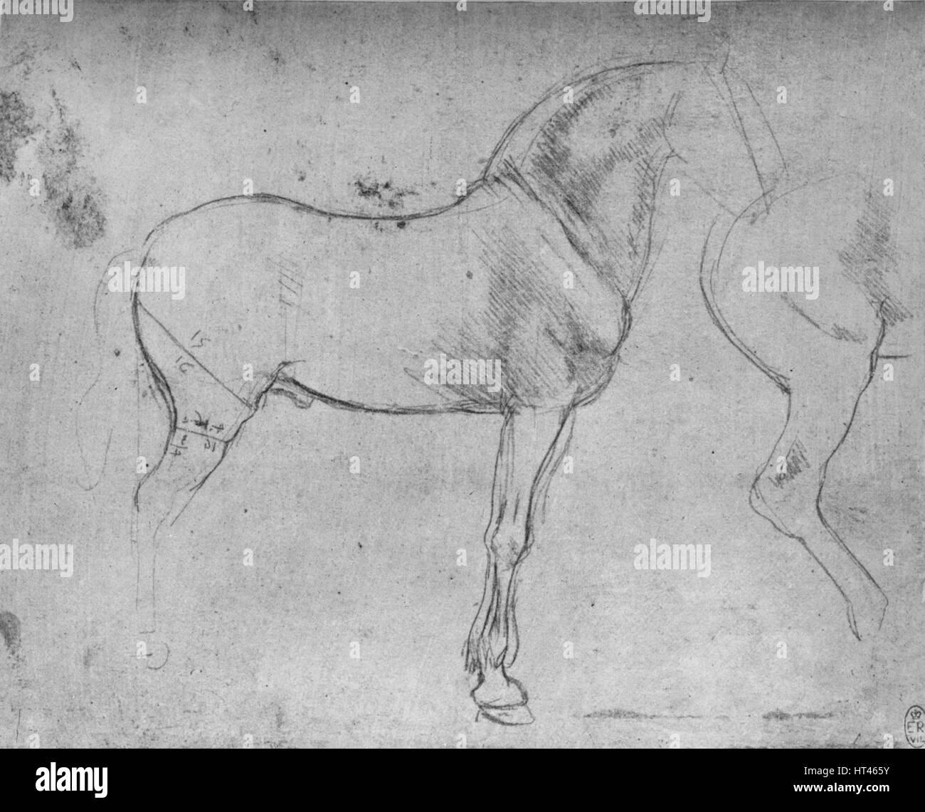 Wunderbar Innere Anatomie Eines Pferdes Bilder - Anatomie Ideen ...