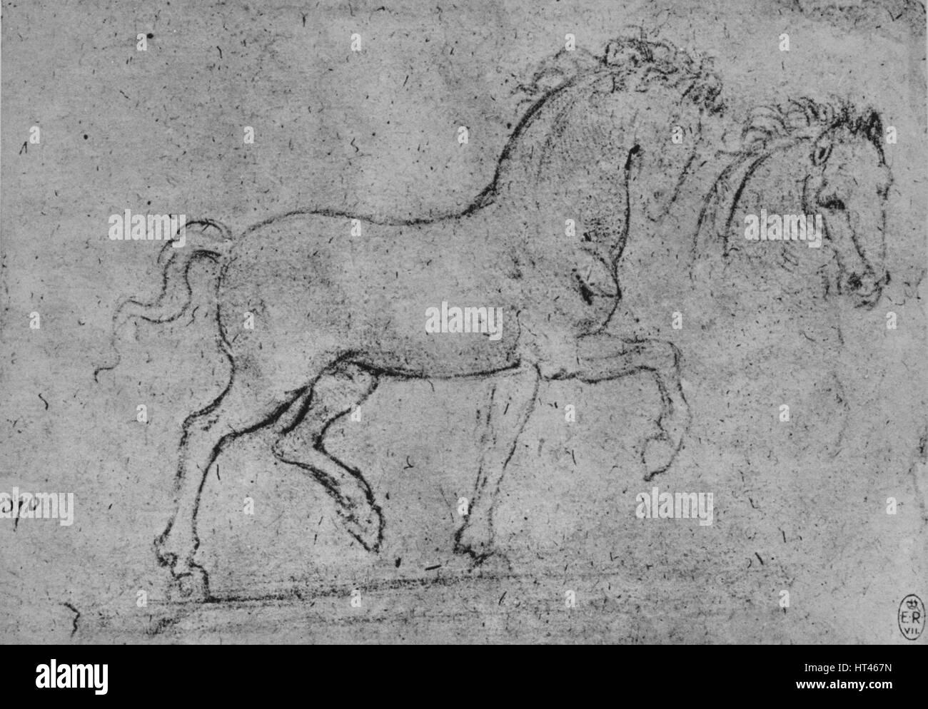 Studie eines Pferdes und der Kopf des Pferdes\