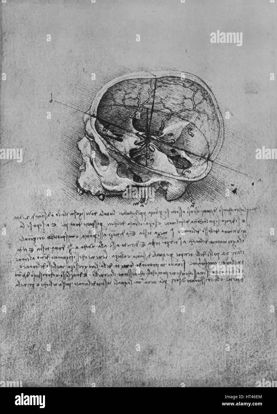Anatomische Zeichnung von einem Schädel auf der linken Seite\