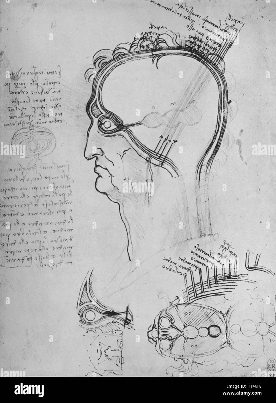 Teil eines Mannes Kopf zeigt die Anatomie des Auges, Etc.\