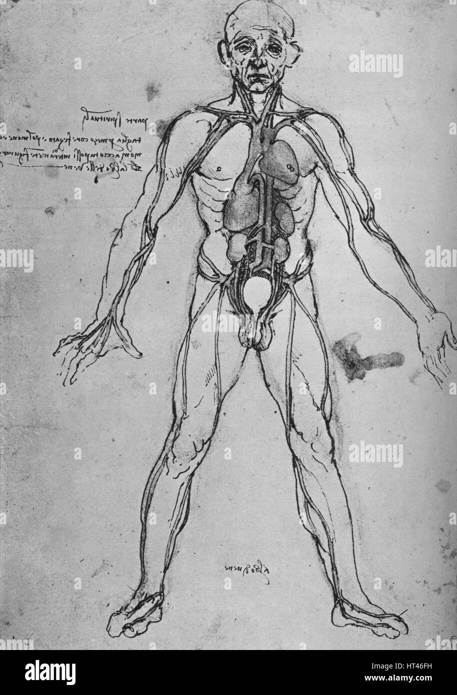 Drawn By Leonardo Da Vinci Stockfotos & Drawn By Leonardo Da Vinci ...