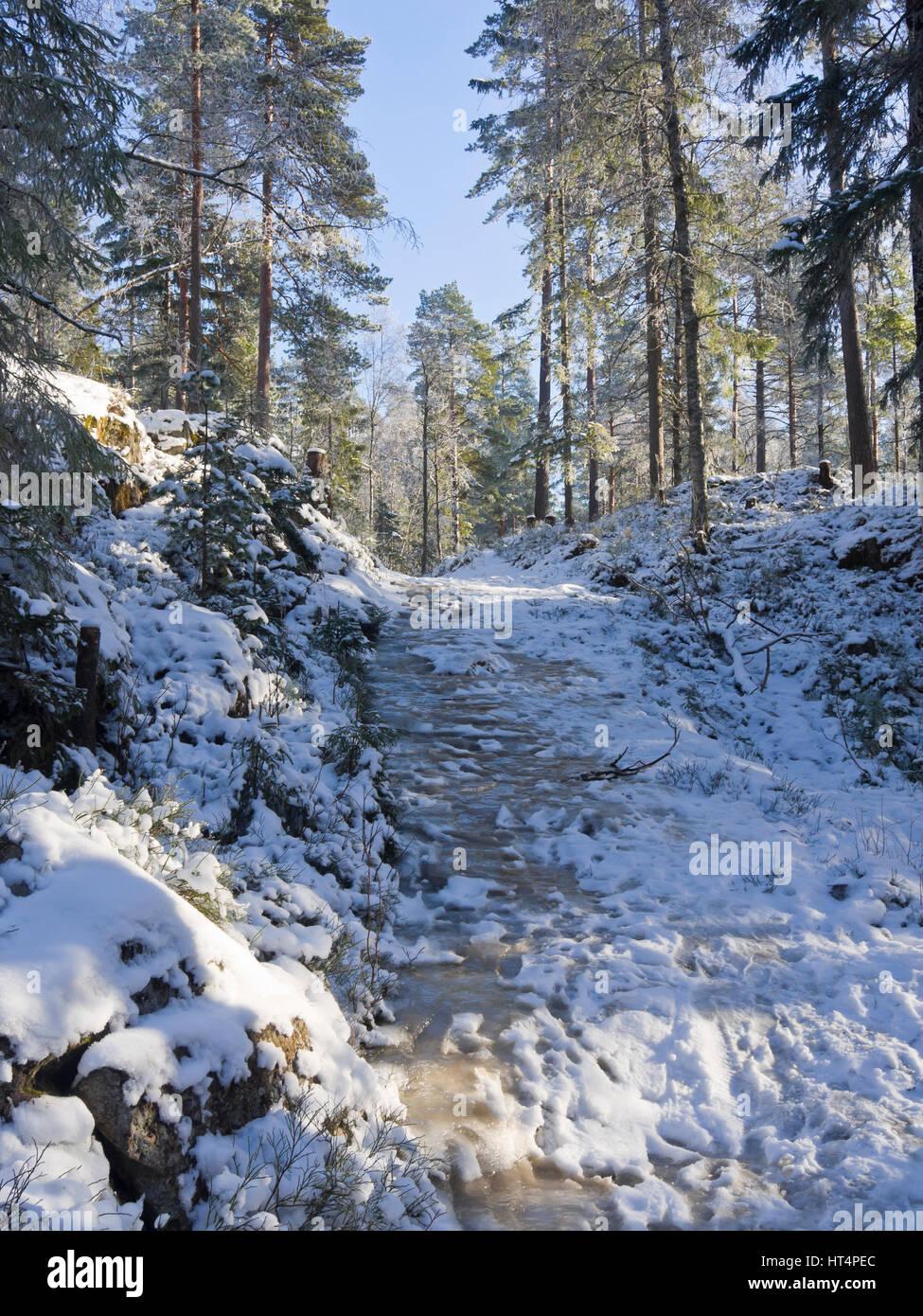 Wanderweg durch den Wald rund um Oslo Norwegen, Winter mit Schnee und ein eisiger bergauf abfallende Strecke Stockbild