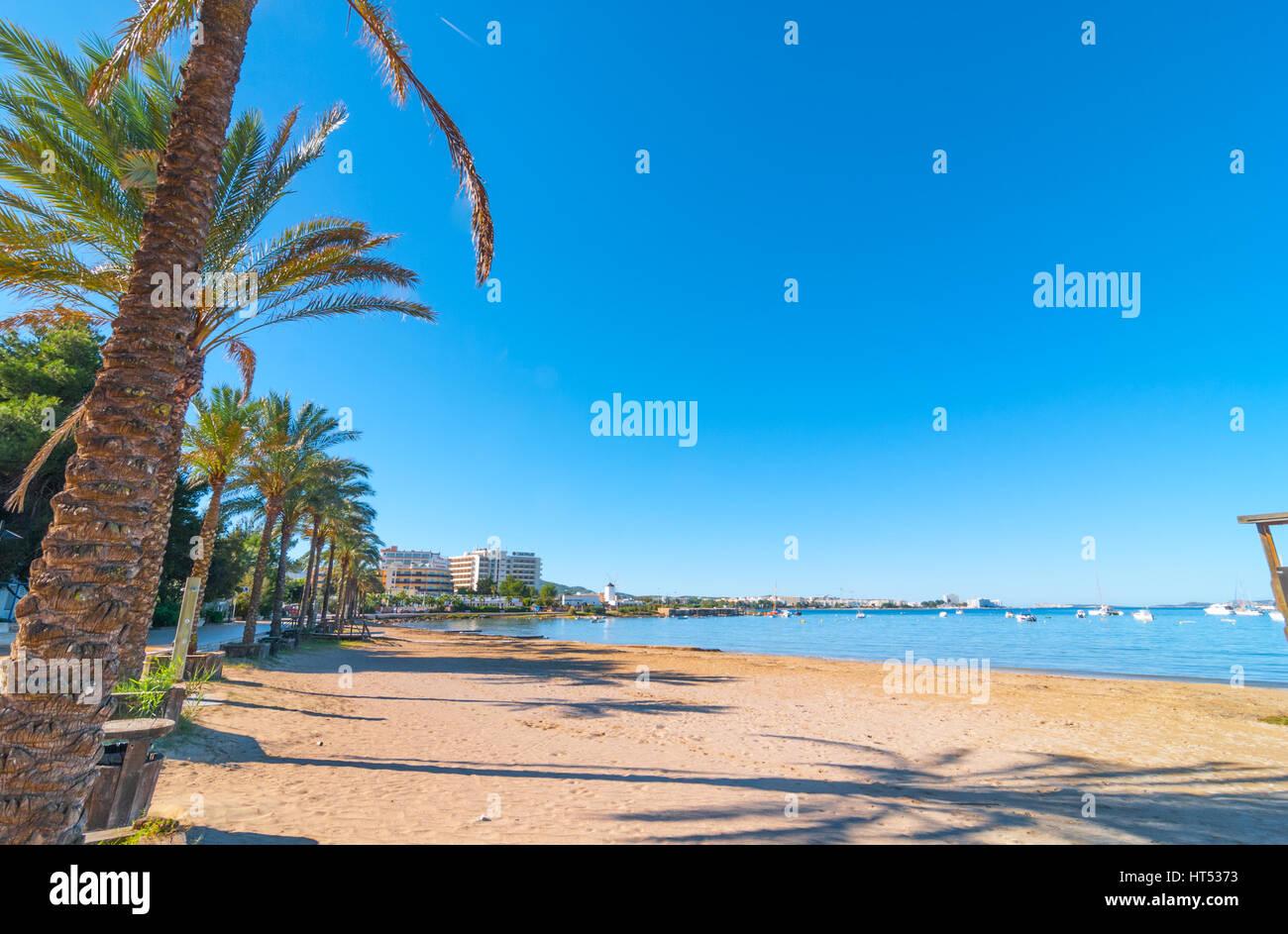 Reihen von Palmen säumen den Strand, sonnigen Tag entlang der Wasserkante in Ibiza, Balearen St Antoni de Portmany, Stockbild