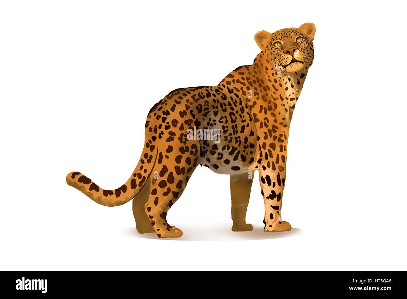 Beste Gepard Malvorlagen Laufen Fotos - Beispiel Anschreiben für ...