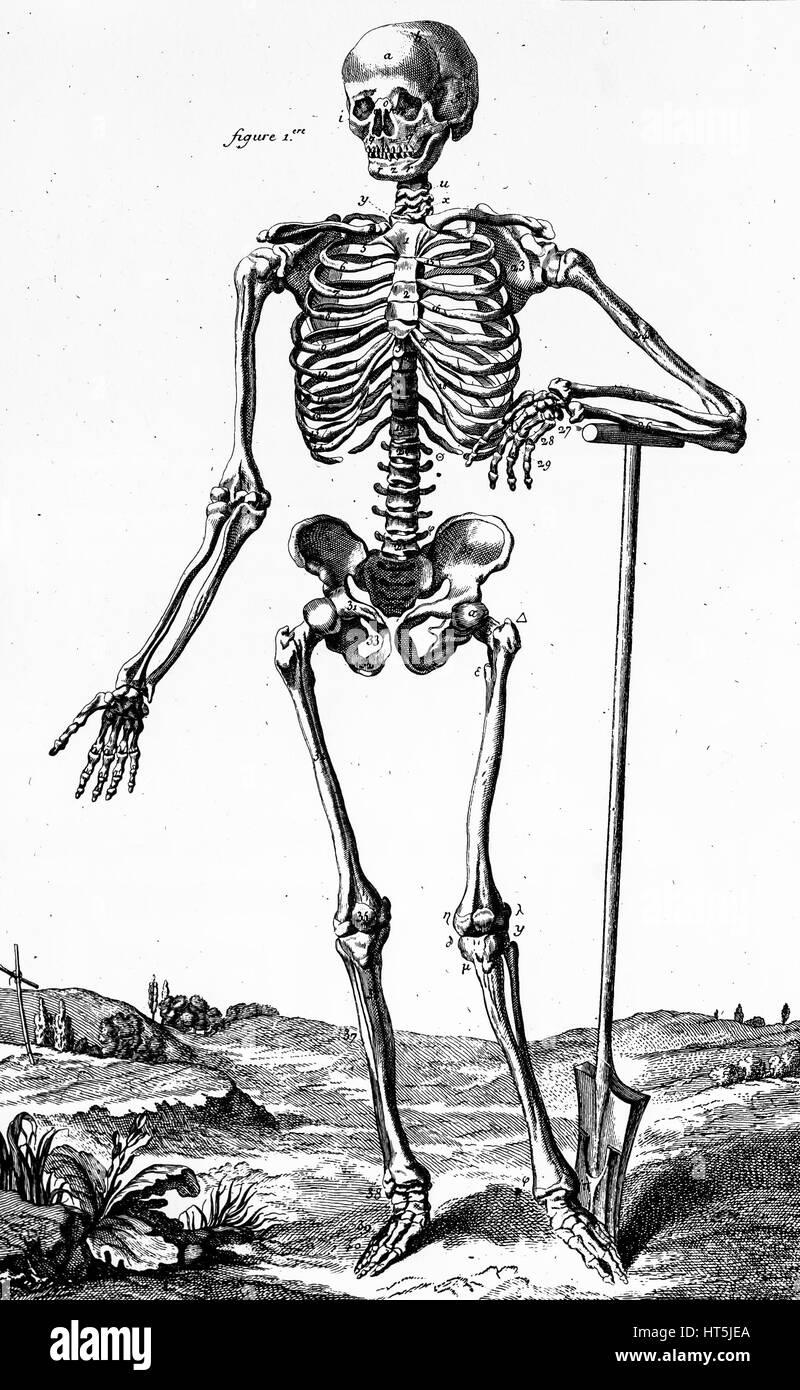 Groß Anatomie Etikettierbeispiele Bilder - Anatomie Ideen - finotti.info