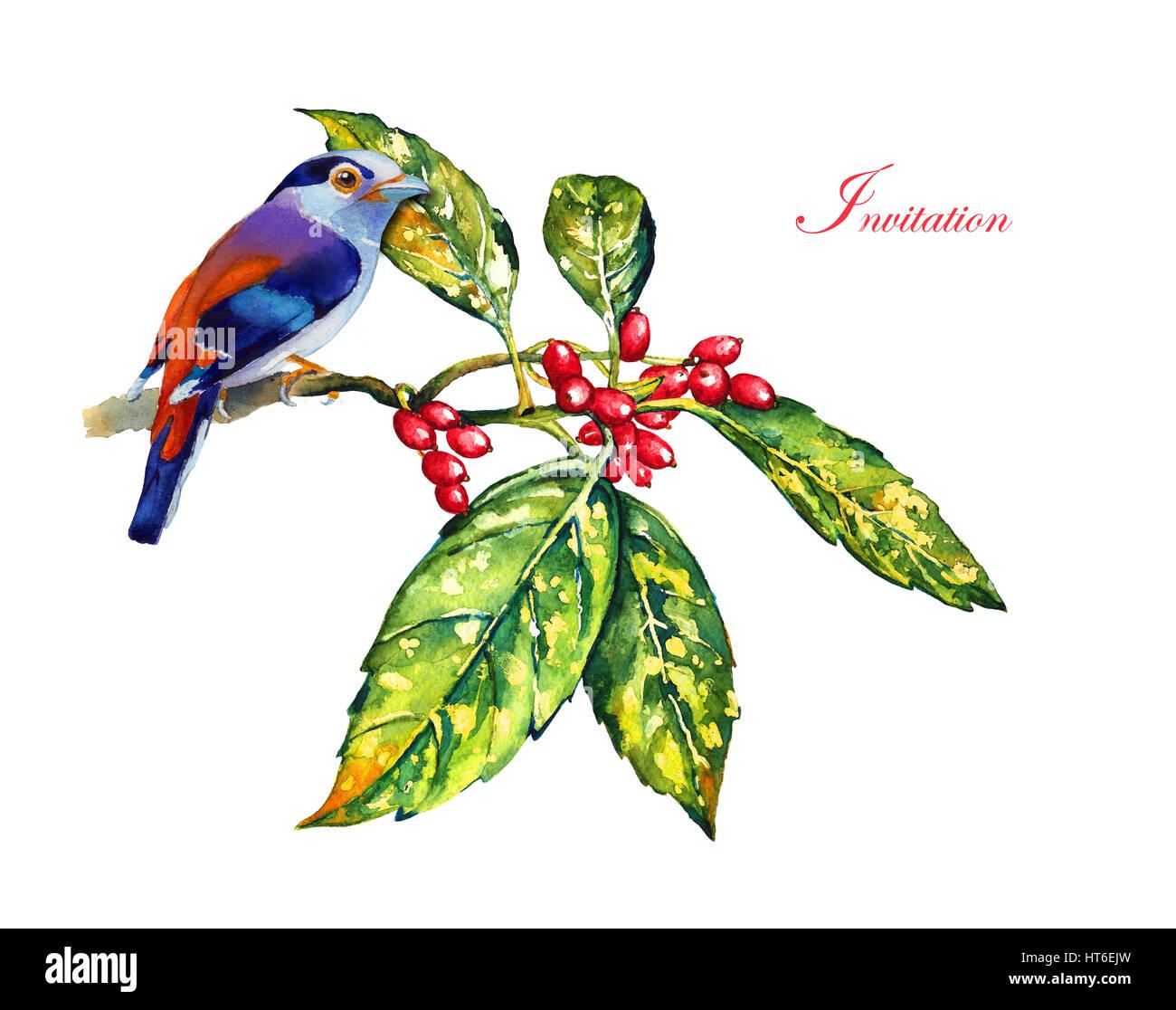Vogel auf einem Zweig mit Beeren. Vorlage für eine Grußkarte mit ...