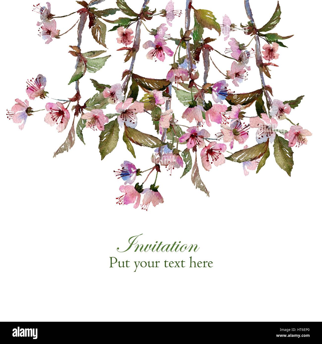 Zweige der blühenden Sakura. Isoliert auf weißem Hintergrund ...