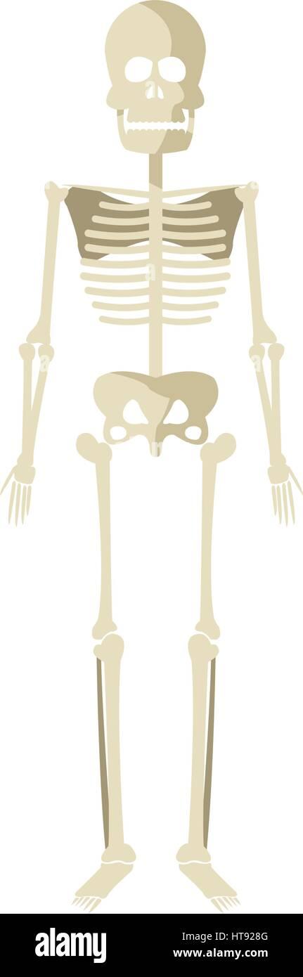 Wunderbar Skelettsystem Ansicht Von Ventral Fotos - Menschliche ...