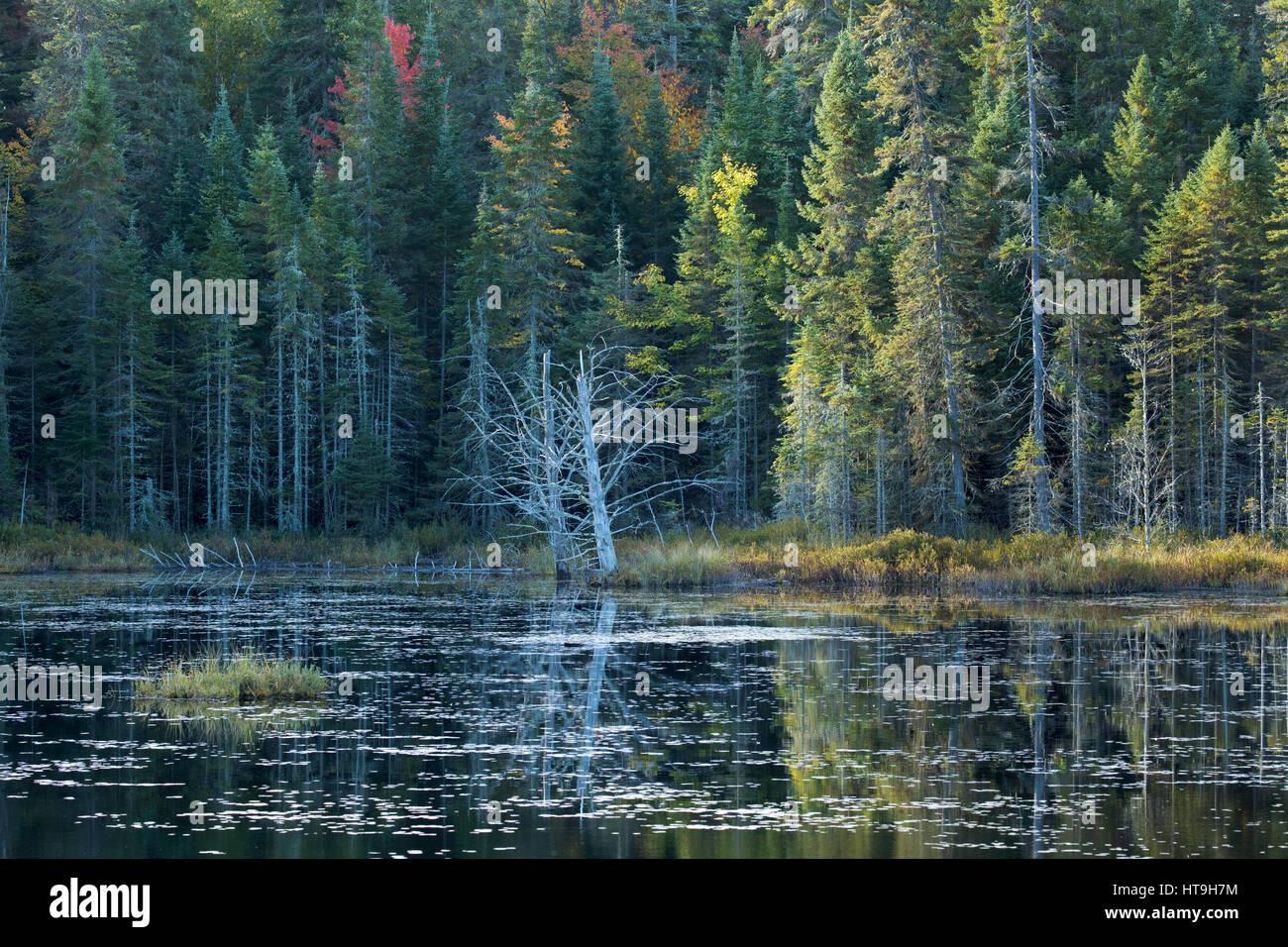 Dawn, Wolf heulen Teich, Algonquin Provincial Park, Ontario, Kanada Stockbild