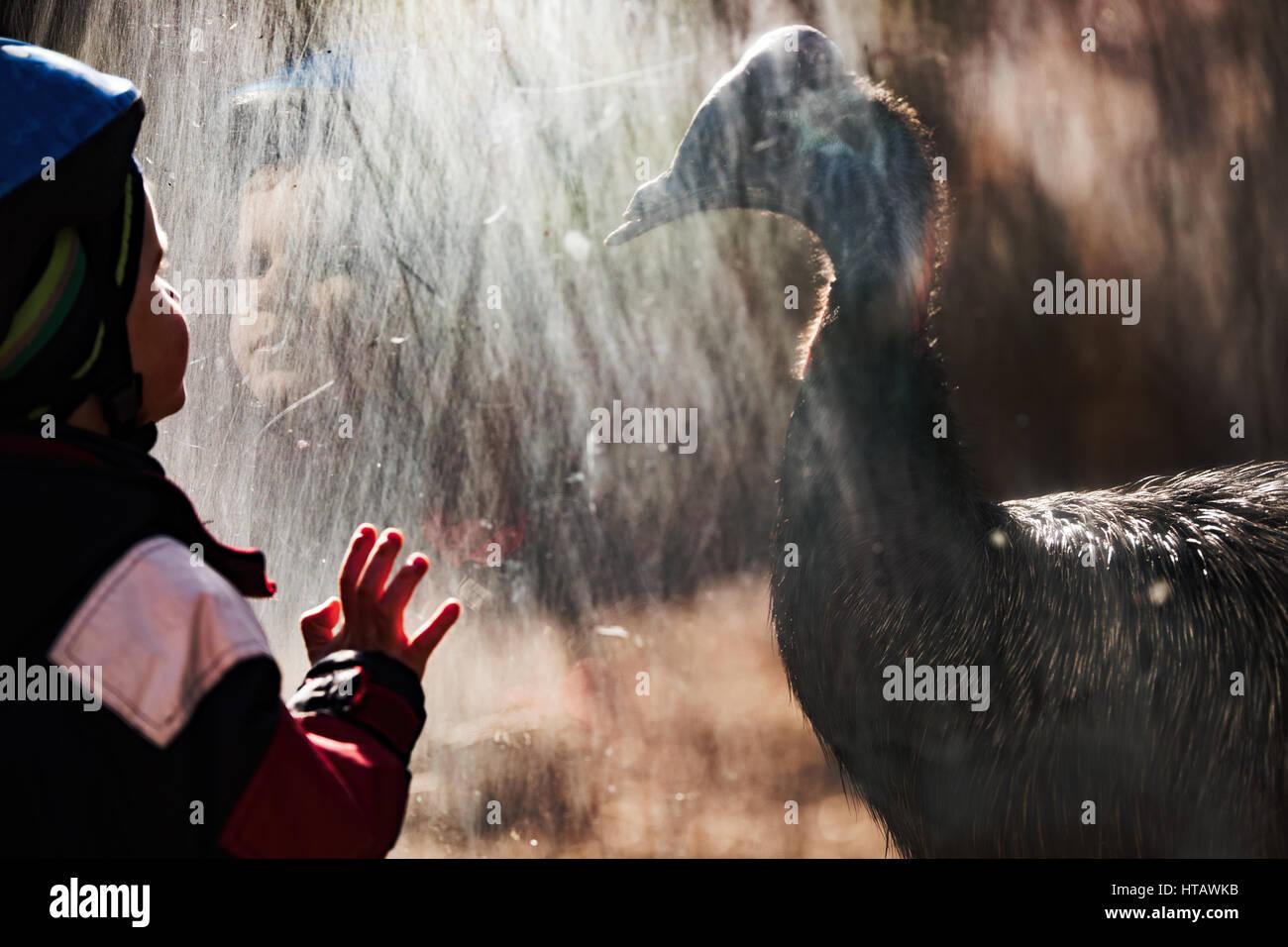 Entzückende kleine Junge im Zoo von Kasuar Vogel fasziniert Stockbild
