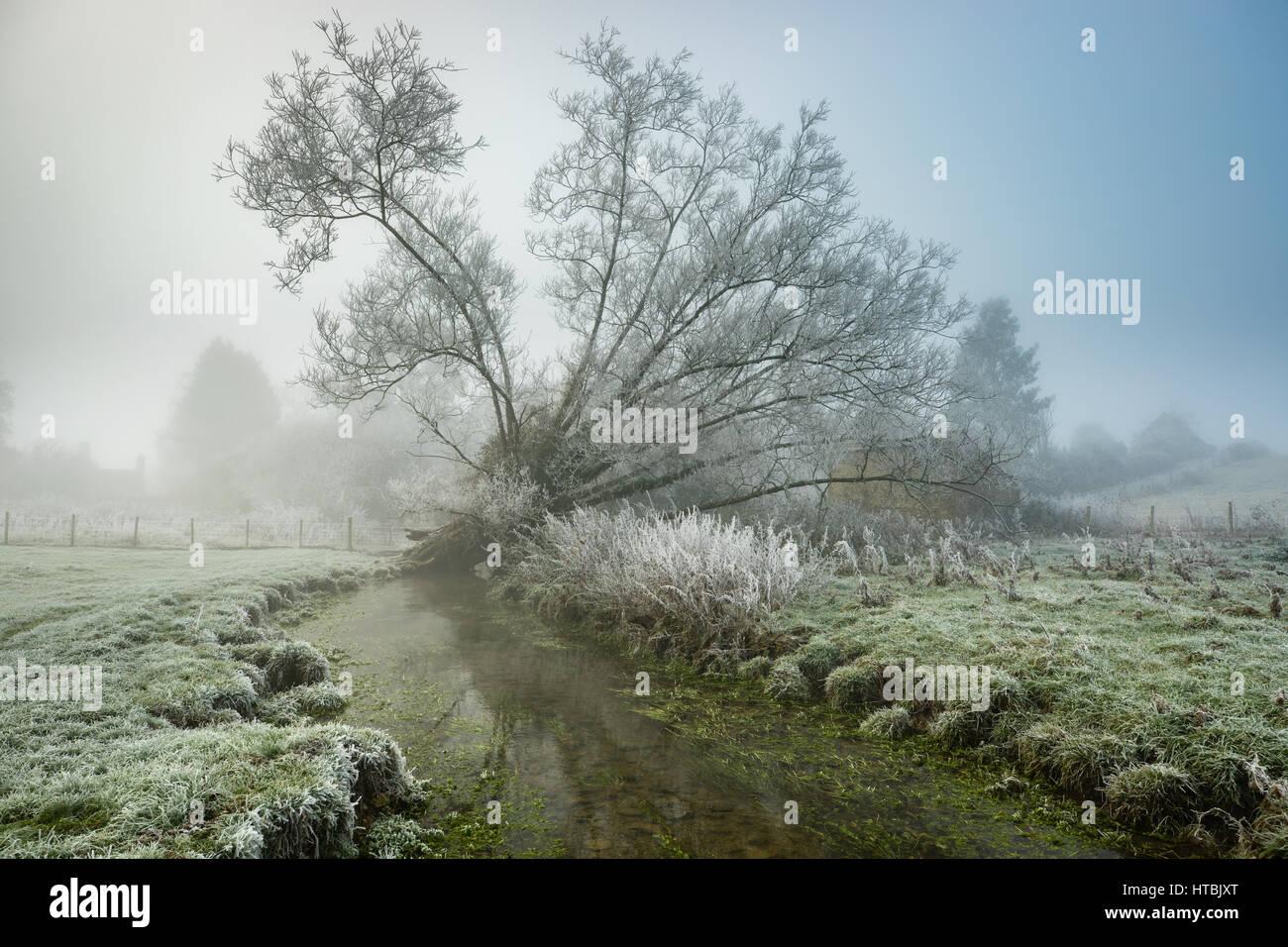Ein nebliger, frostigen Morgen an den Ufern des Gascoigne, Kingsbury, Milborne Port, Somerset, England, UK Stockbild