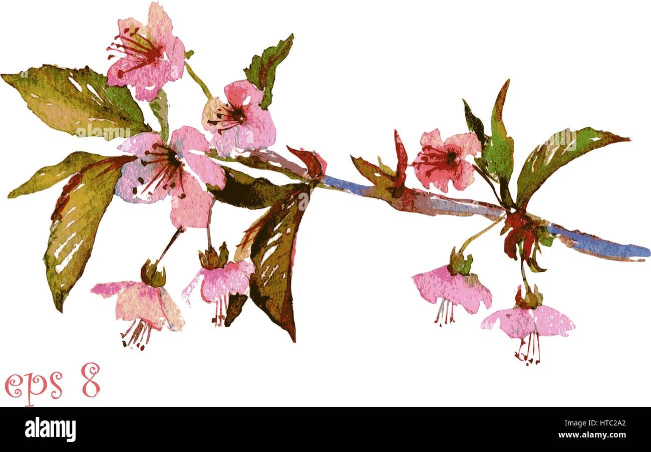 Handgemaltes Aquarell Illustration der Kirschblüte, Sakura Zweig mit ...