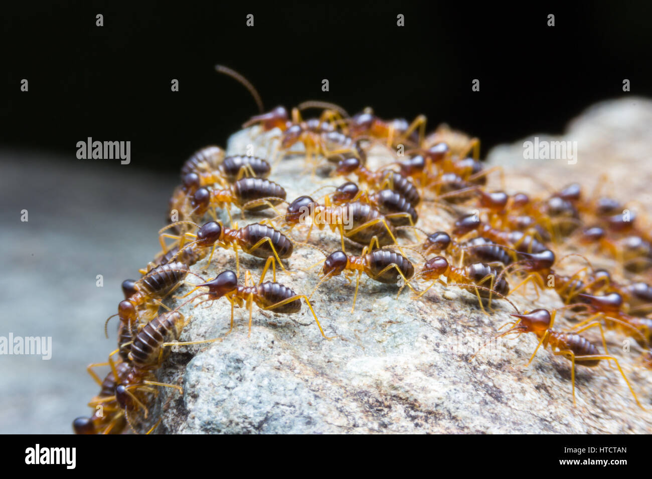 Termites Nests Stockfotos & Termites Nests Bilder Alamy