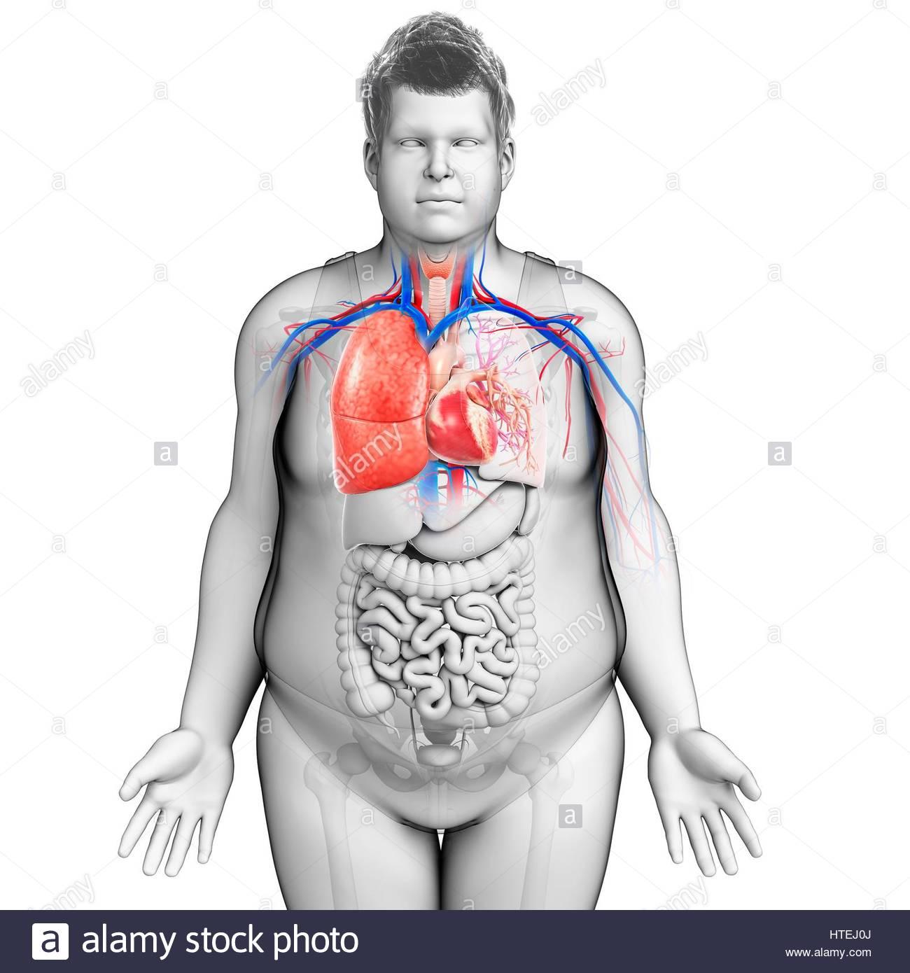 Ungewöhnlich Oberfläche Anatomie Der Brust Zeitgenössisch ...
