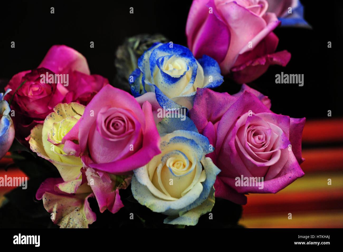 Viele Arten Von Rosen Wachsen In Rosenplantage Rose Erfolg In Der