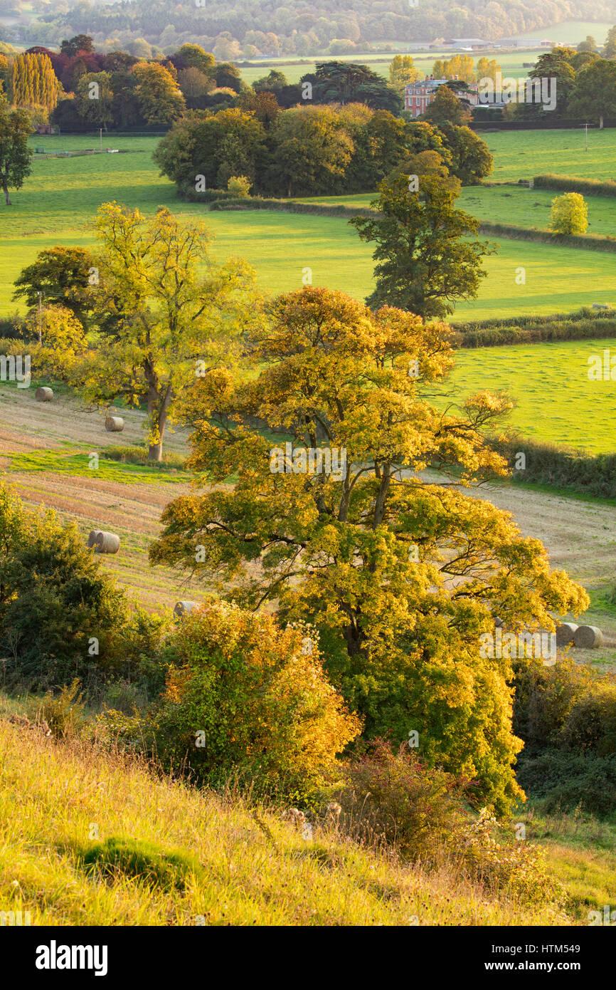 Herbstfärbung im Tal rund um Milborne Wick, Somerset Stockfoto