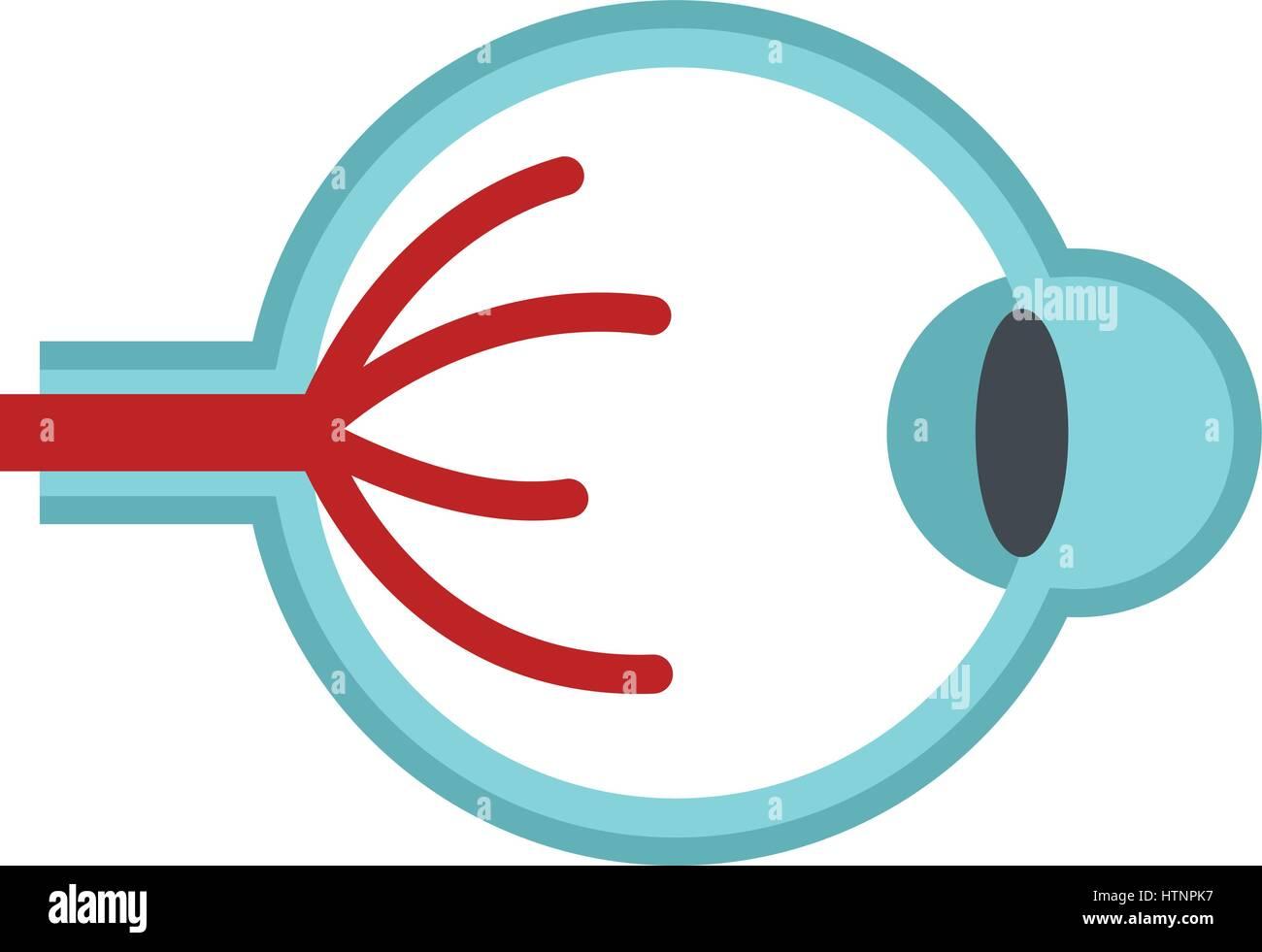 Auge-Anatomie-Symbol, flachen Stil Vektor Abbildung - Bild ...