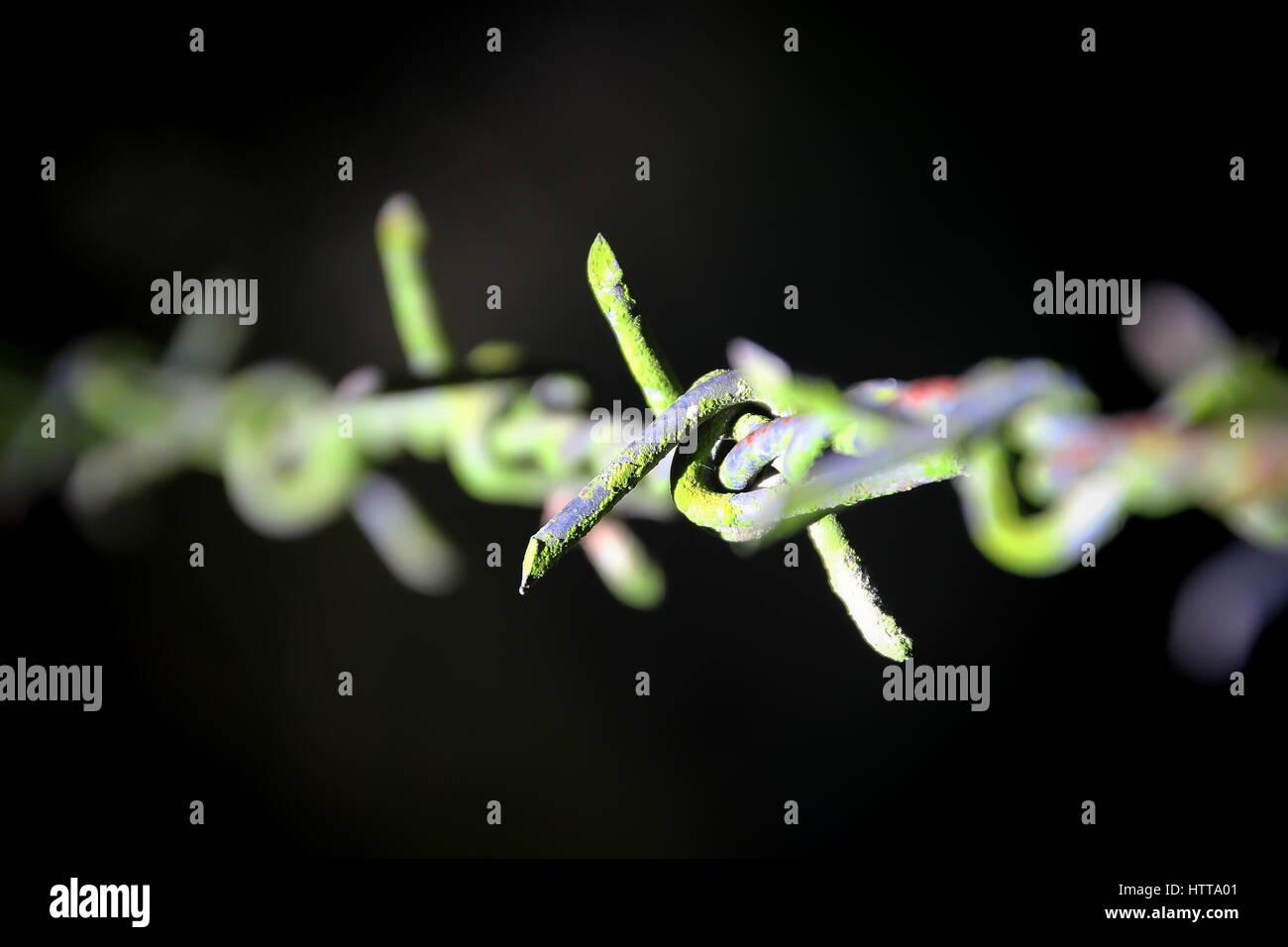 Geschlossen bis abstrakte Hindernis - Stacheldraht mit grünem Moos Stockbild