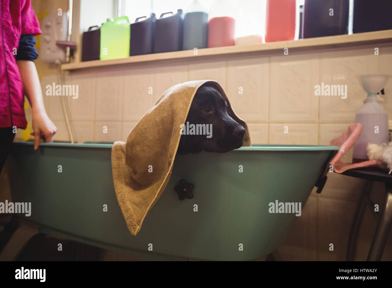 Hund Mit Badetuch In Badewanne Stockfoto Bild 135781043 Alamy