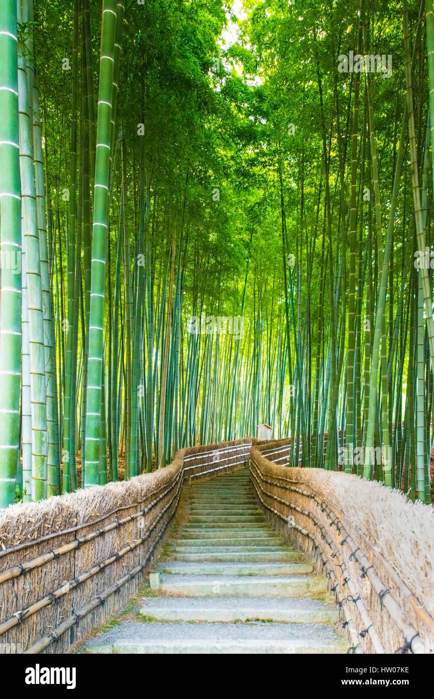 Bambushainen Bambuswald In Arashiyama Kyoto Japan Stockfoto Bild