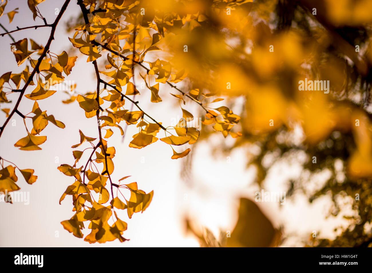 China Botschaft Stockfotos China Botschaft Bilder Alamy