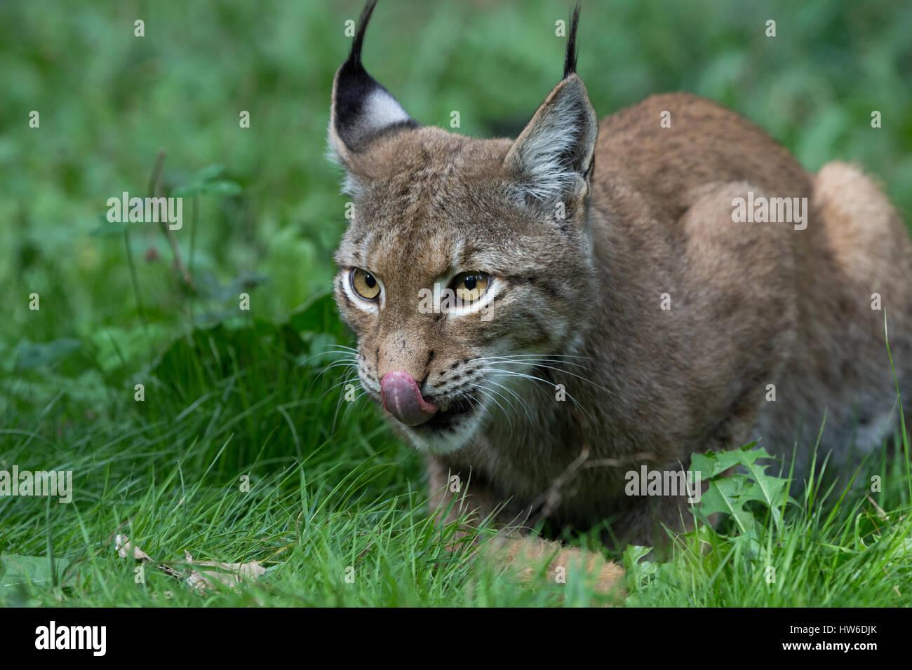 Katze Futter Stockfotos & Katze Futter Bilder - Alamy