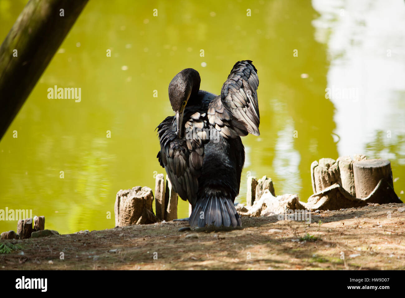 Beste Schwarze Drahtspeicherwürfel 10x16 Fotos - Schaltplan Serie ...