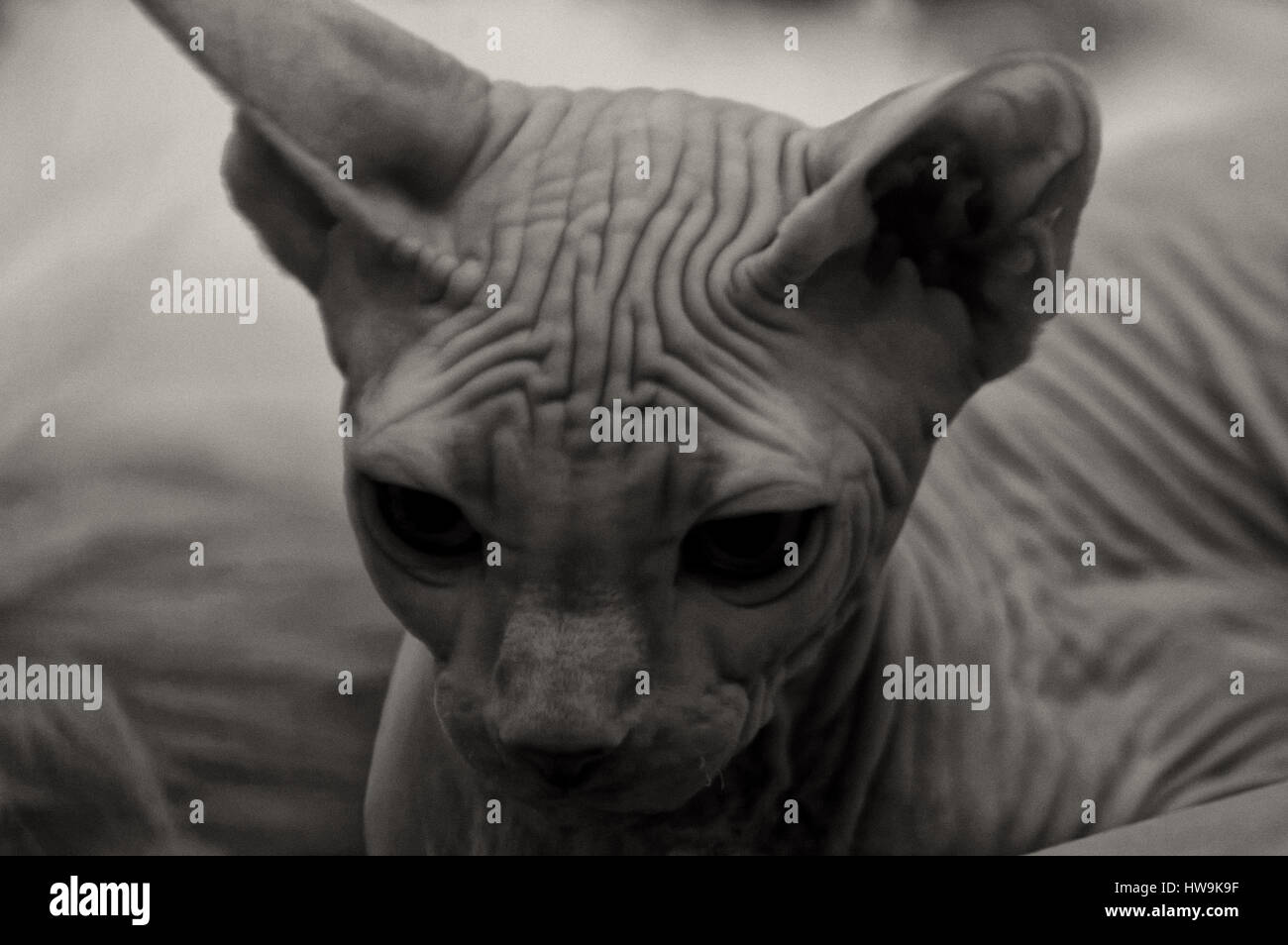 Illustrations Animals Image Cat Kitten Images Stockfotos