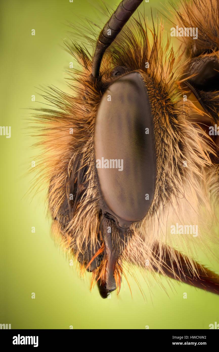 Extreme Vergrößerung - Honey Bee Stockbild