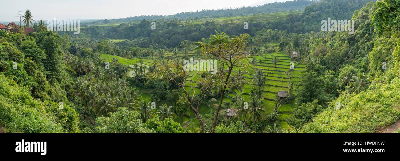 Reisfelder in der Nähe von Senaru Panorama, Lombok, Indonesien Stockbild