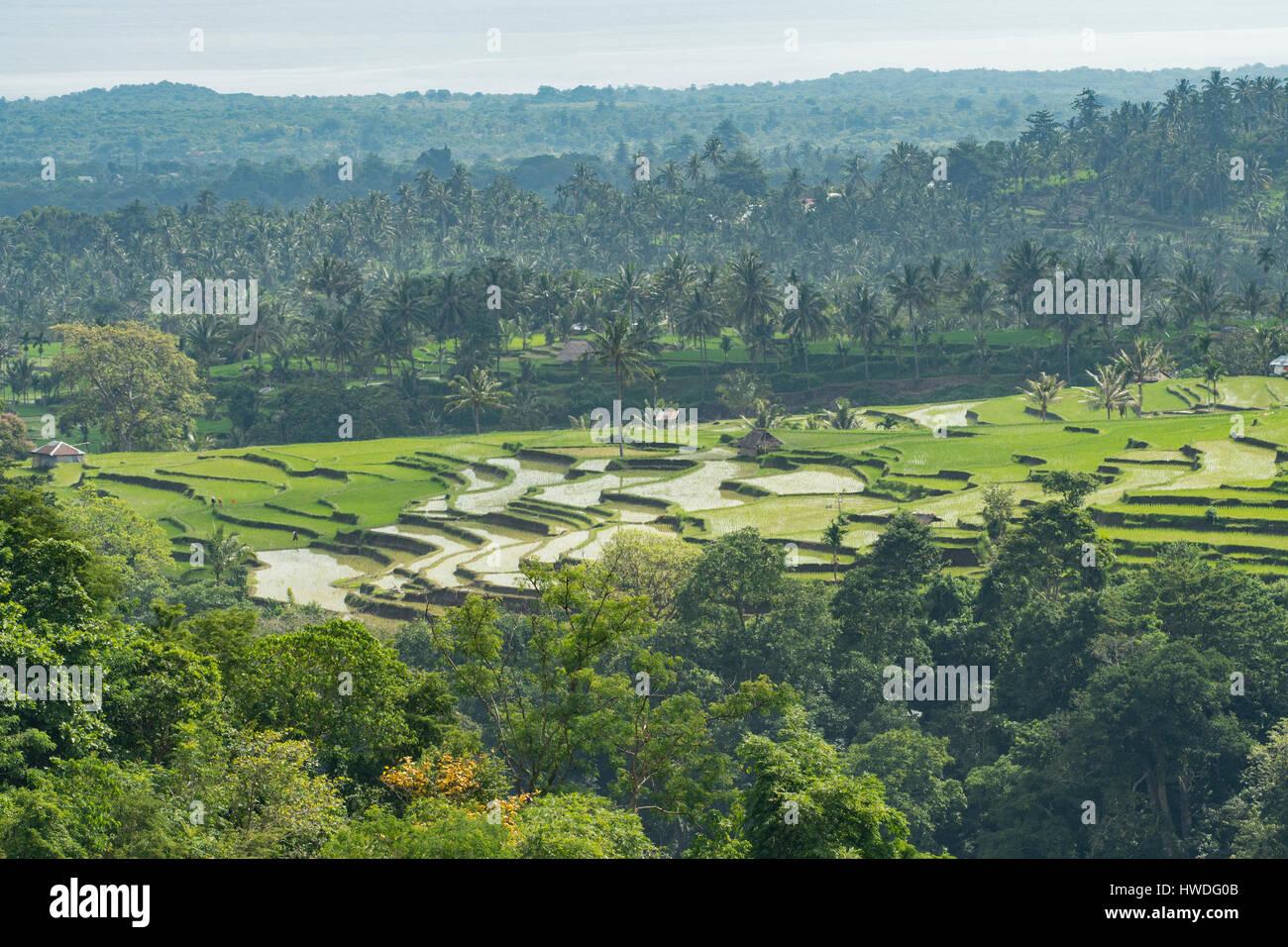 Reisfelder in der Nähe von Senaru, Lombok, Indonesien Stockbild
