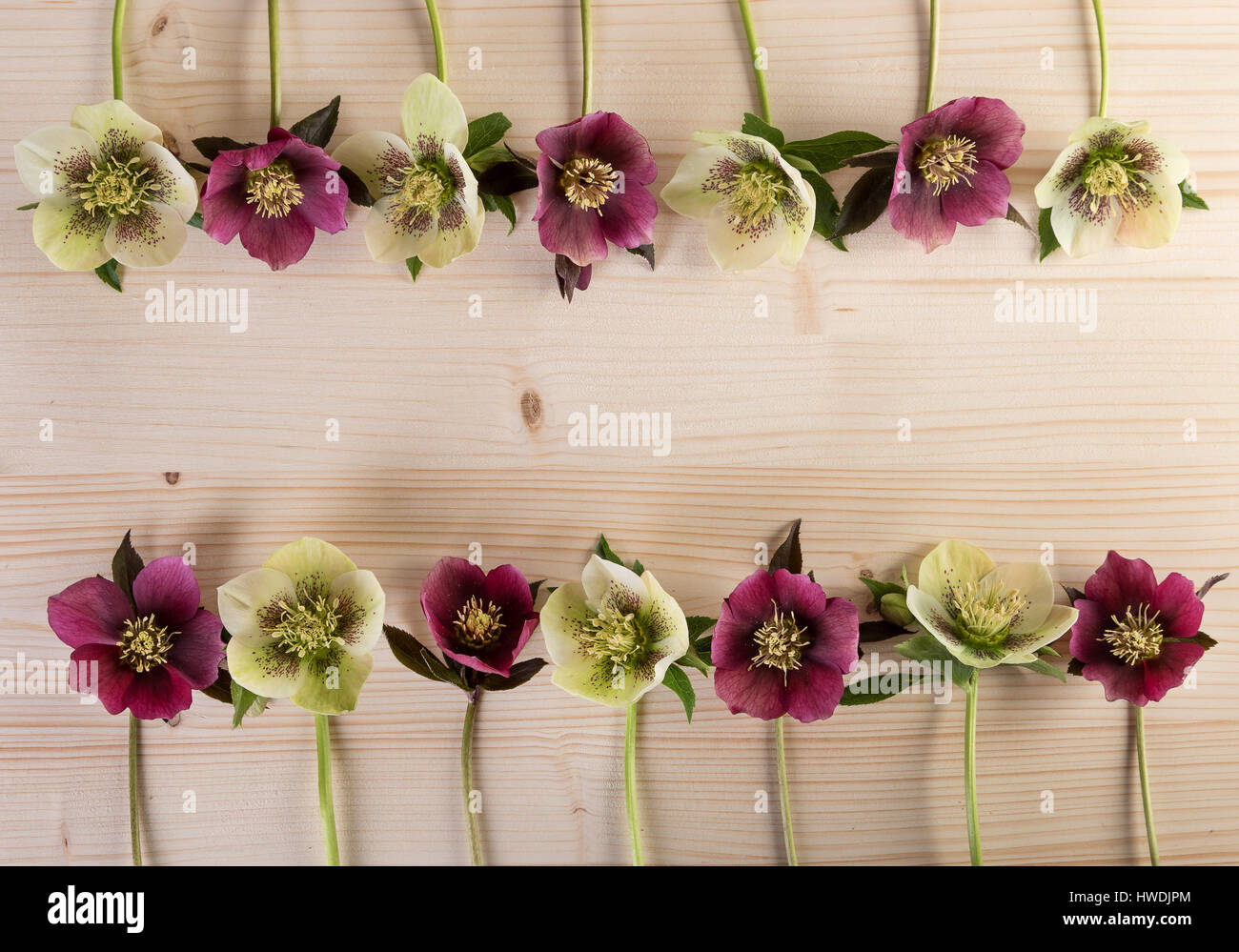 Frühling Ostern Blume Vintage Rahmenhintergrund mit Fastenzeit Rosen ...