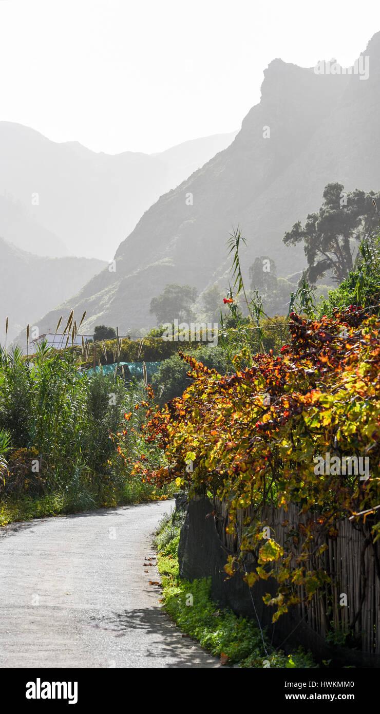 Berglandschaft, Bäume, Früchte Fod und verschiedenen Farben ...