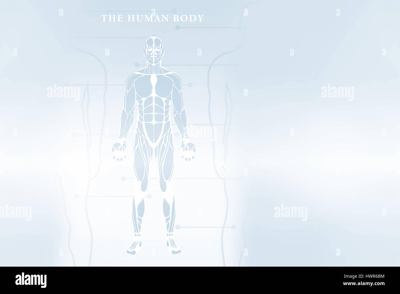 Human Body Diagram Stockfotos & Human Body Diagram Bilder - Alamy
