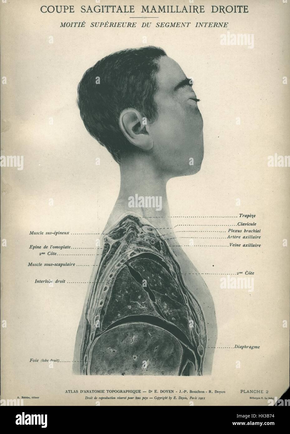 Anatomy Atlas Stockfotos & Anatomy Atlas Bilder - Alamy