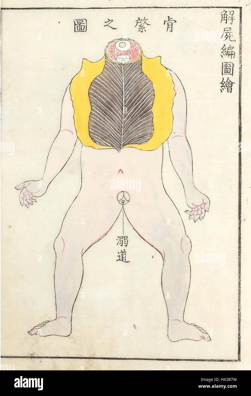 Zeichnen eines menschlichen Körpers mit der Brust aufgeschnitten in ...